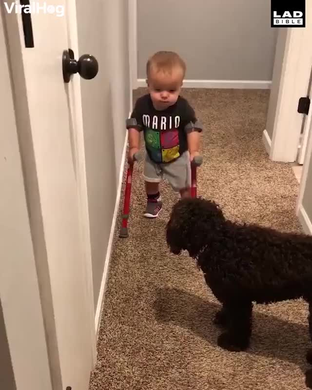 Watch 'Look Maggie, I'm walking!' This kid is awesome 👊❤️🔊 GIF by Nomorefoxgiven (@nomorefoxgiven) on Gfycat. Discover more LADbible GIFs on Gfycat