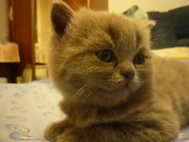 Watch and share Cat GIFs by teistom on Gfycat