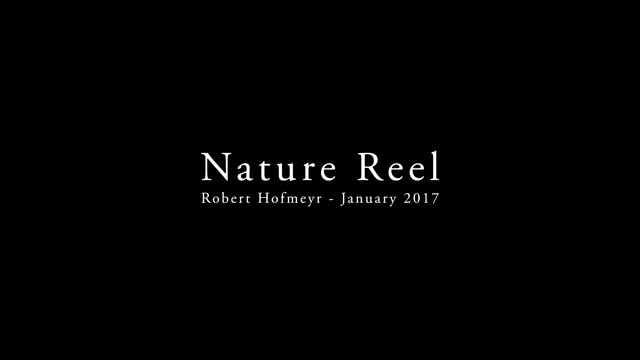 Watch 4K African Wildlife | African Nature Showreel 2017 by Robert Hofmeyr GIF on Gfycat. Discover more 4K video, African wildlife, South Africa, Wildlife documentary films, birds, buffalo, lion, plains animals, rhinno, snakes GIFs on Gfycat
