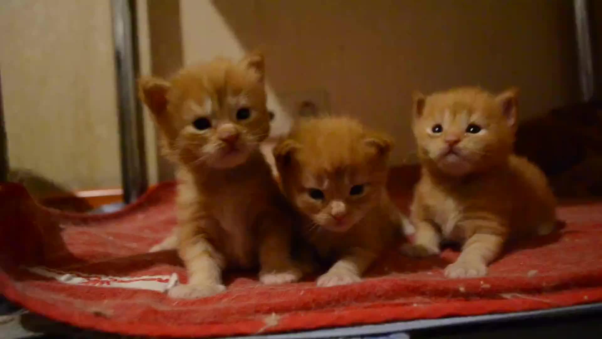 Cute kittens, Cute kittens GIFs