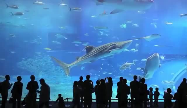 Watch and share Largest Aquarium In The World Screensaver GIFs on Gfycat