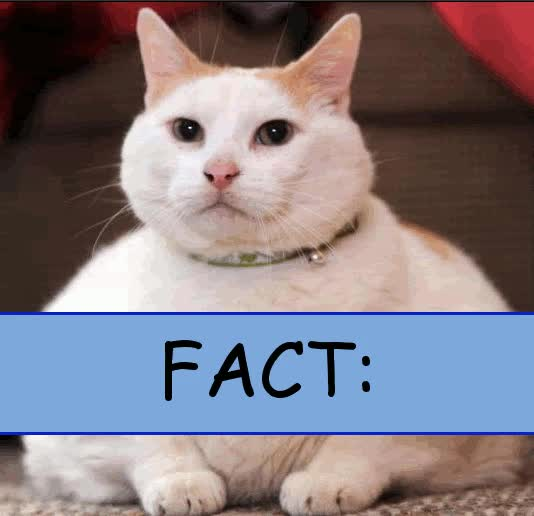 Watch and share Fact GIFs on Gfycat