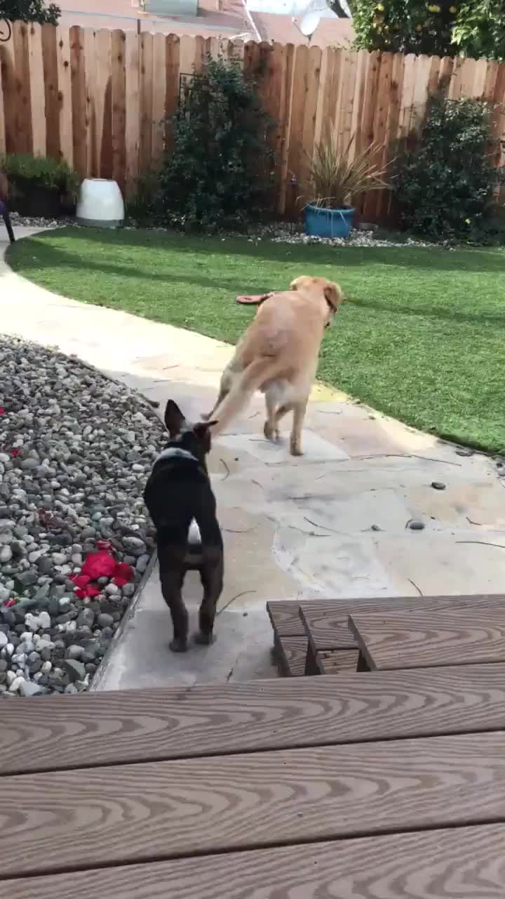 dogs, puppy, Excited about a new puppy GIFs