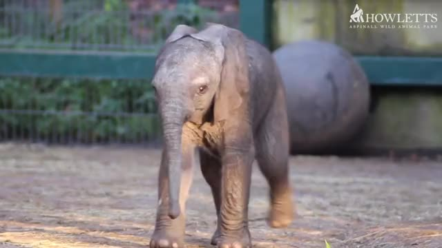 Watch and share Elephant GIFs by PM_ME_STEAM_K3YS on Gfycat
