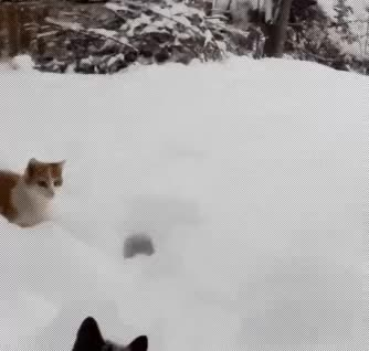 Watch and share Snowed GIFs on Gfycat