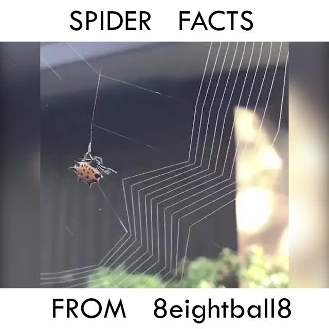 Watch and share Spider Facts GIFs on Gfycat