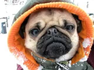 brr, brrr, cold, dog, socold, cold GIFs