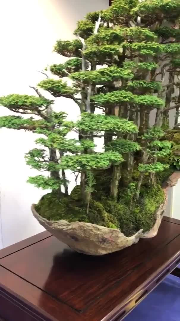 Watch and share Gorgeous Bonsai Tree Forest GIFs by tothetenthpower on Gfycat