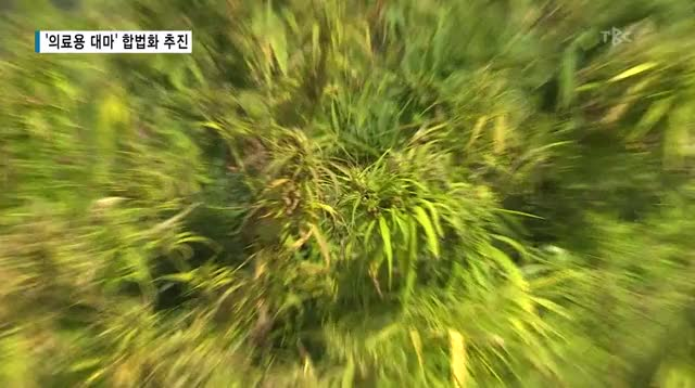 Watch and share 의료용 대마 GIFs and 알츠하이머 GIFs by Koreaboo on Gfycat