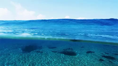 Watch and share Morgan Maassen GIFs and Half And Half GIFs on Gfycat