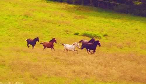 Watch Horses GIF on Gfycat. Discover more related GIFs on Gfycat