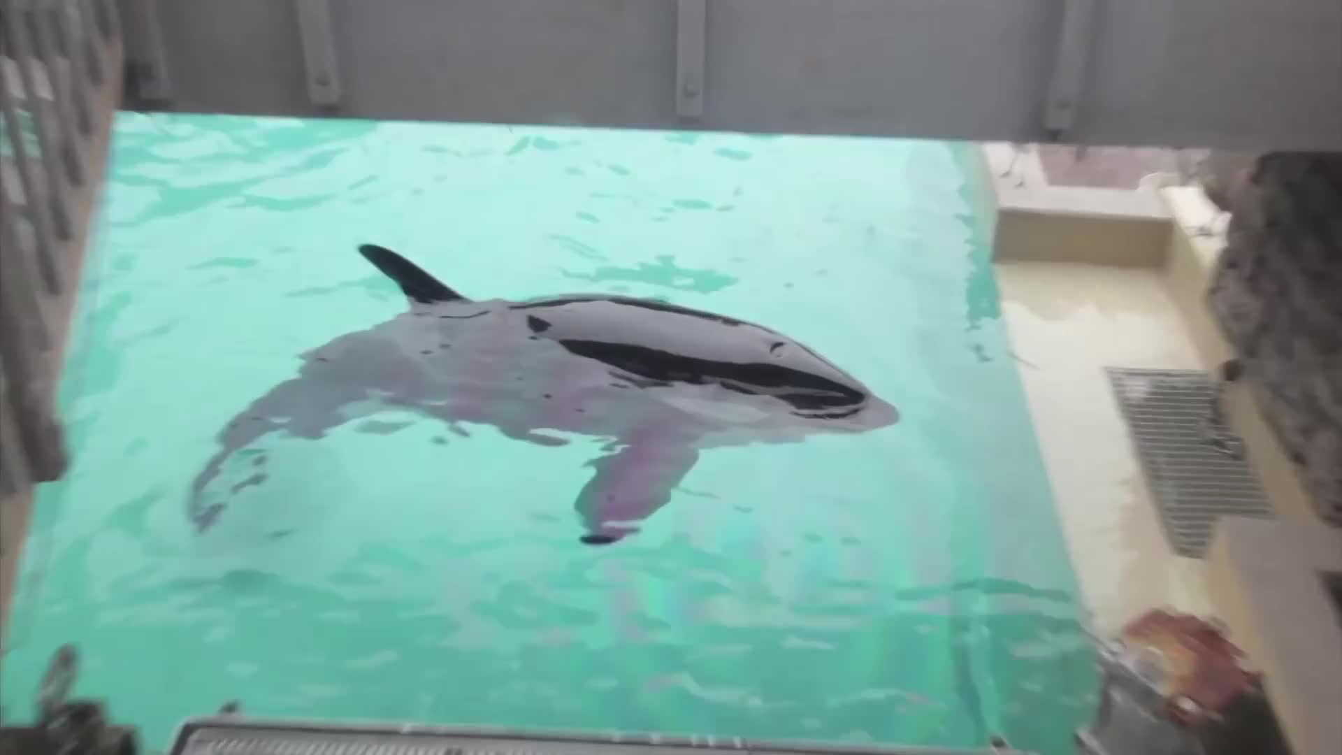 PETA, animal cruelty, aquarium, killer whale, orca, whale, Whales in Trouble 🐋 GIFs