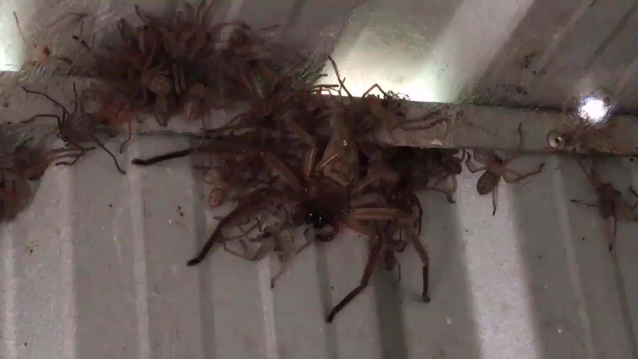 Много пауков гифка, новый год стихи