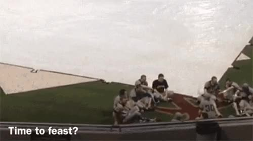 Watch and share Florida State Feast During Rain Delay GIFs on Gfycat