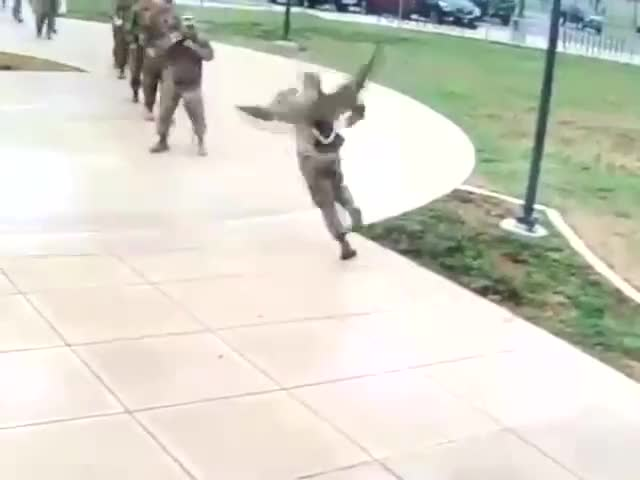 Watch Goose Intimidates Soldiers -- ViralHog GIF on Gfycat. Discover more related GIFs on Gfycat