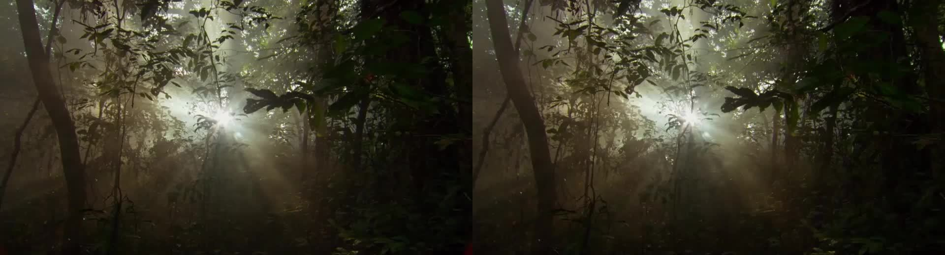 africa, crossview, Africa -  S1E3, 1:21 (Crossview Conversion) GIFs