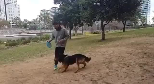 Watch and share Aww GIFs by bong55555 on Gfycat