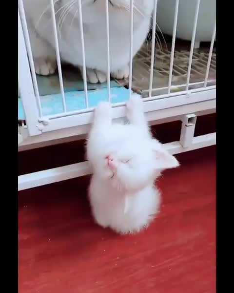 Watch and share Lovely Cat Online GIFs by Master1718 on Gfycat