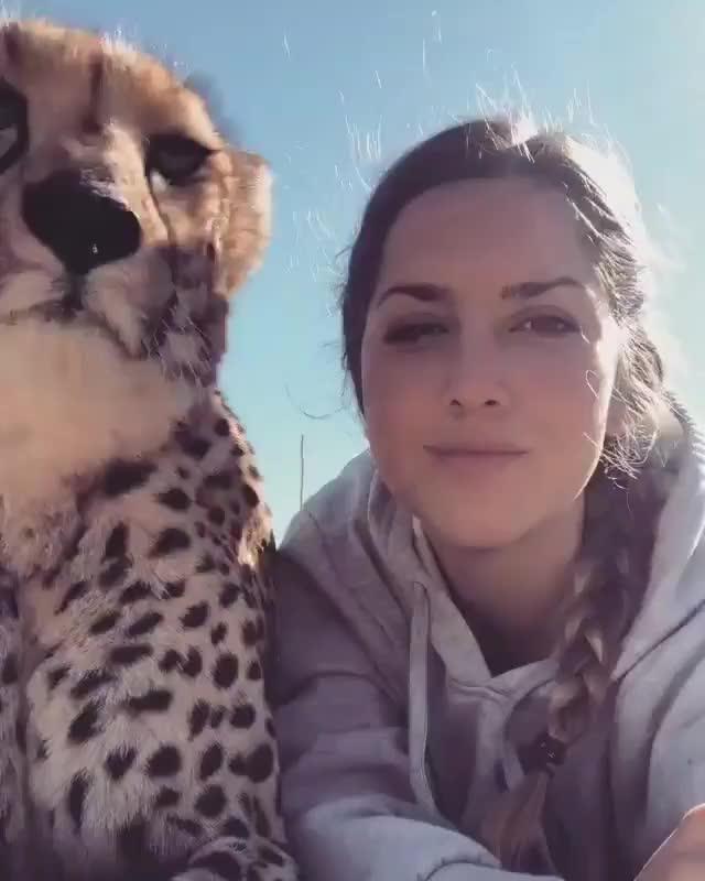 Watch and share Just Feeding Some Speedycats - Album On Imgur GIFs on Gfycat