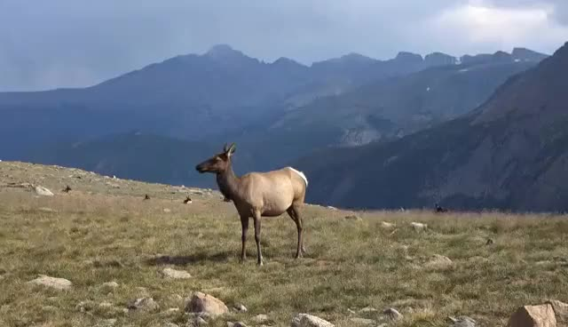 Watch and share Rocky Mountain National Park, Colorado, USA In 4K (Ultra HD) GIFs on Gfycat