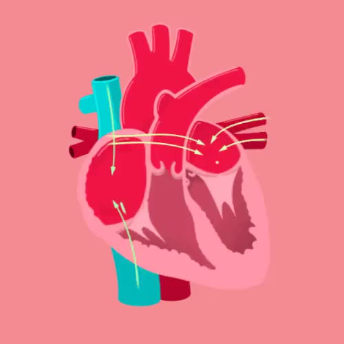 Watch Thought Cafe GIF on Gfycat. Discover more anatomy, animated gif, crash course, education, gif, hank green, heart, physiology, science GIFs on Gfycat