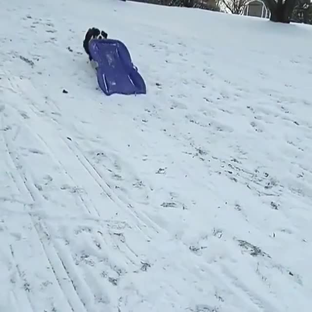 Watch and share Sledding GIFs and Snow GIFs by Slim Jones on Gfycat