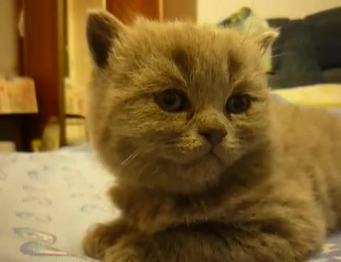 Watch and share Kitten GIFs on Gfycat