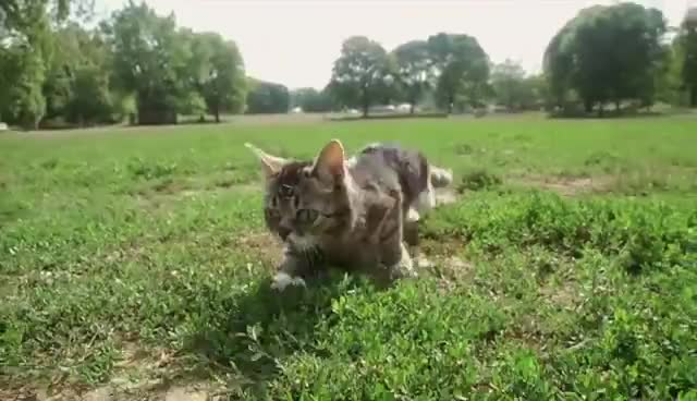 bub, cat, cute, cutecat, funny, bub GIFs