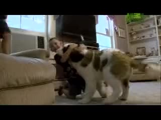 Watch and share Animal Planet GIFs and Animal Videos GIFs on Gfycat