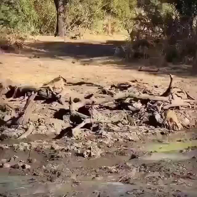 Watch and share African Animals GIFs by rk on Gfycat