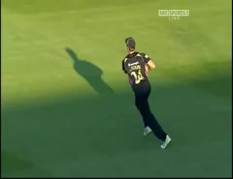 Watch Catch the Pigeon GIF on Gfycat. Discover more Cricket, pigeon, rudolph, yorkshire GIFs on Gfycat