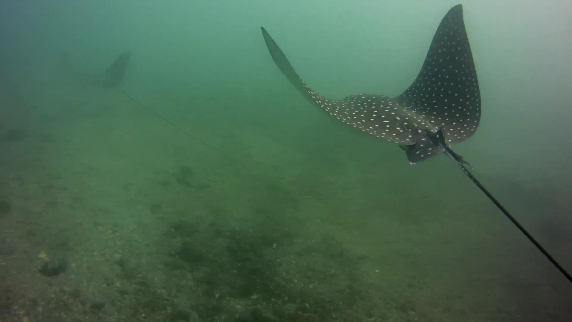 flying fish, scuba, scuba dive, Living the Dream 2.0 (Ryan Walton 2016) GIFs
