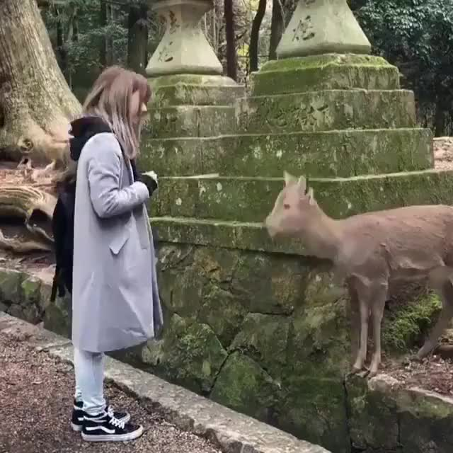 Watch and share Dear Deer GIFs by alternations on Gfycat