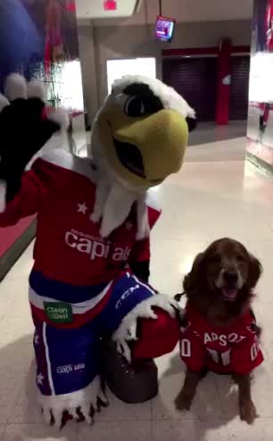 hawwkey, dog and slapshot GIFs