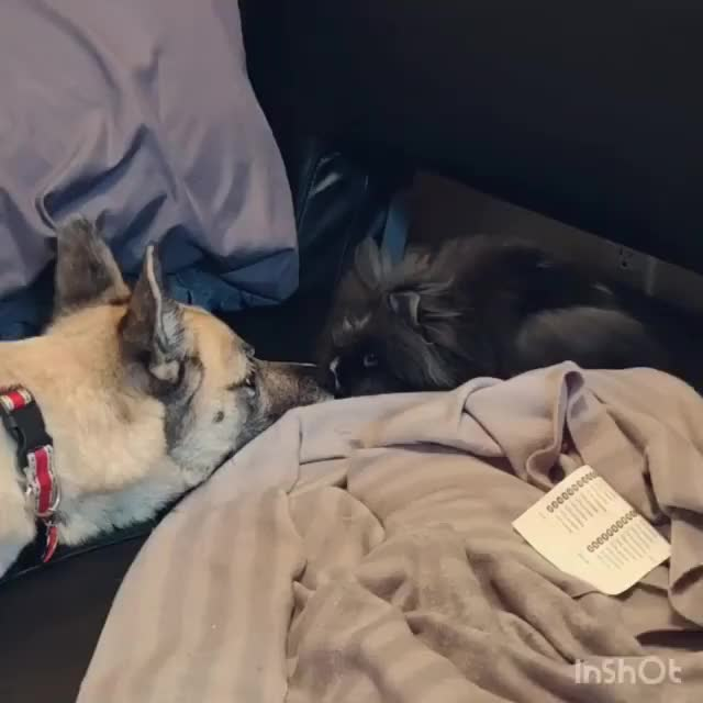Watch and share Animals GIFs and Bunnies GIFs on Gfycat