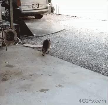 Watch asfas GIF by @masha on Gfycat. Discover more fasf, fsaf, fsas GIFs on Gfycat