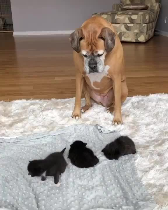 aww club, dog, kittens, Aww Club -