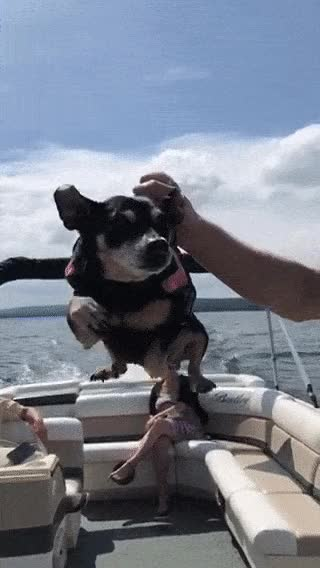 Watch this boat GIF by Chris Knauer (@cjknauer) on Gfycat. Discover more awww, boat, dog, pupper, puppy, swim, swimmer, swimming GIFs on Gfycat