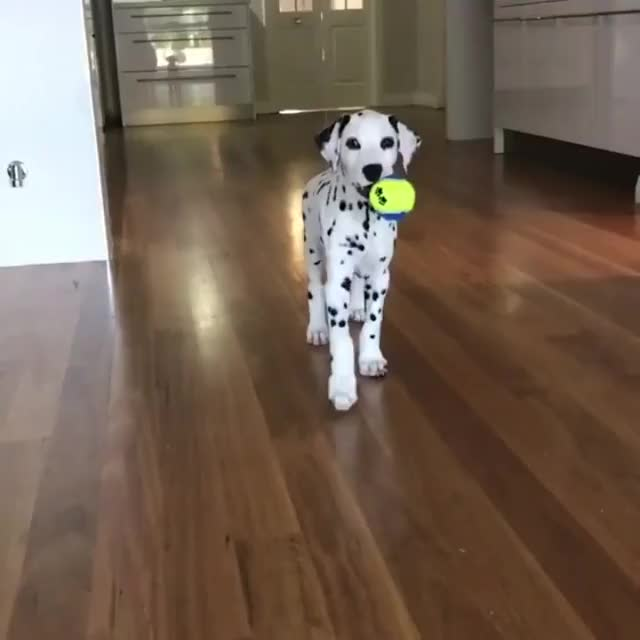 Watch Adorable Dalmation! GIF by @likkaon on Gfycat. Discover more related GIFs on Gfycat