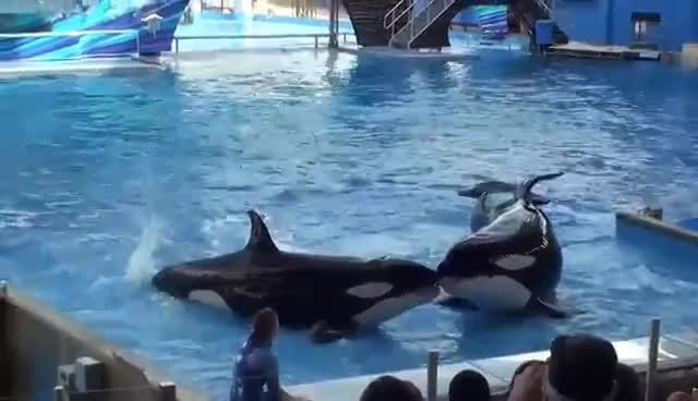 Hehe, Whales, Whales Hehe GIFs