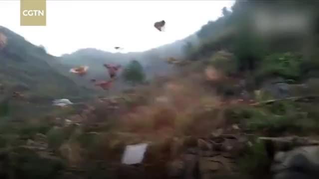 Watch Farmer whistles and his chickens fly down for the feast GIF on Gfycat. Discover more cctvnews, cgtn, news GIFs on Gfycat