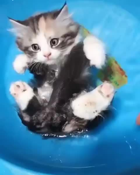 Watch and share Kitten Floater GIFs by Boojibs on Gfycat