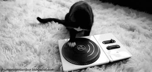 Watch and share Gatos-fofos-gatinho-dj GIFs on Gfycat