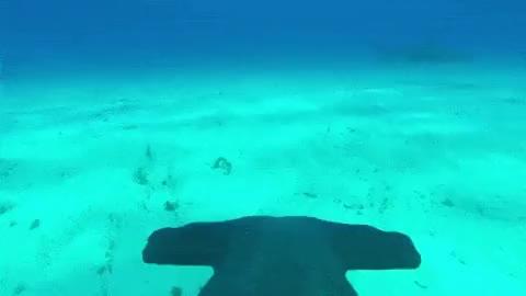 Watch and share Hammerhead Shark Fin Cam GIFs on Gfycat