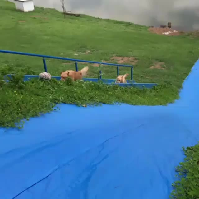 When good boys find the slide of their dreams GIFs