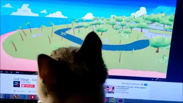 funny, pcmasterrace, test, My cat loves Drift Stage GIFs