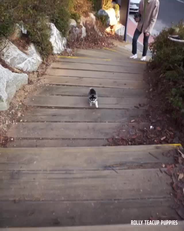 Watch and share Puppy GIFs by vani  on Gfycat