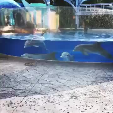 These dolphins are watching the squirrels GIFs