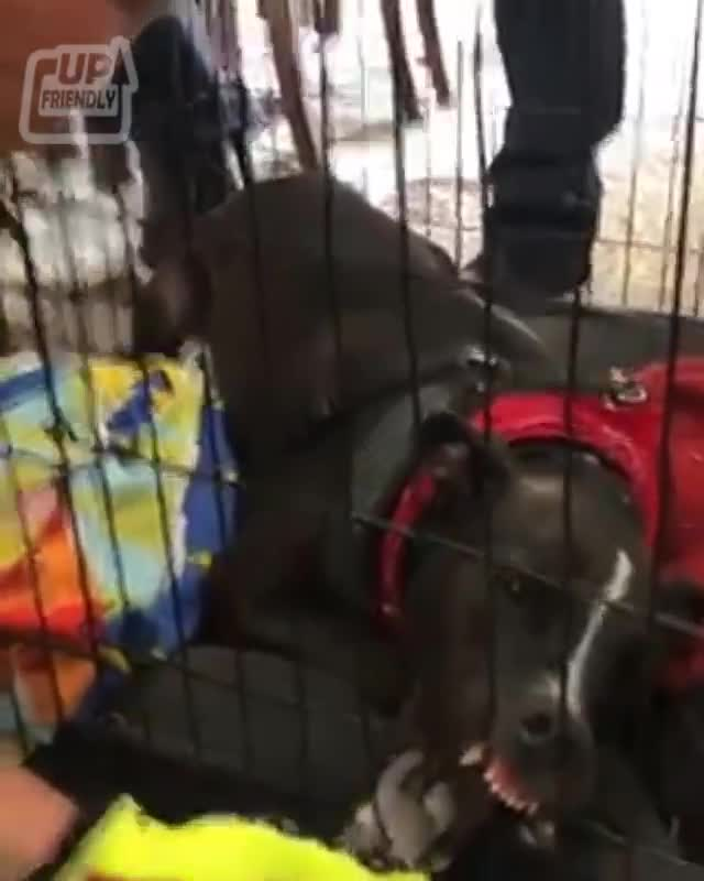 Firefighter attempts to free a dog caught on her cage, Firefighter called to free a dog's jaw caught on her cage! 🥺 credit: wctv & ... GIFs