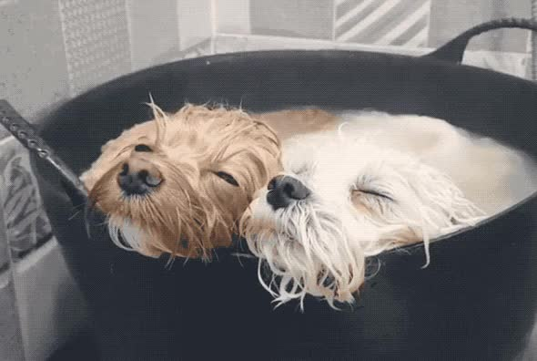 Watch and share Together GIFs and Puppies GIFs by Reactions on Gfycat